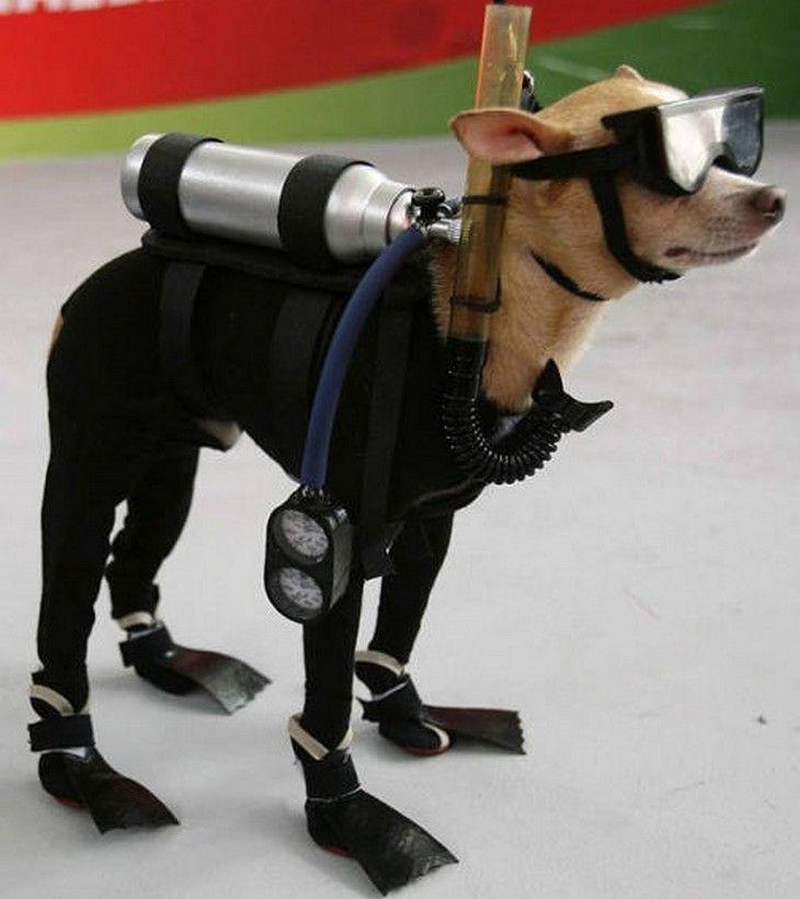 20 Ideias de Fantasias para os cães de Dia das Bruxas!