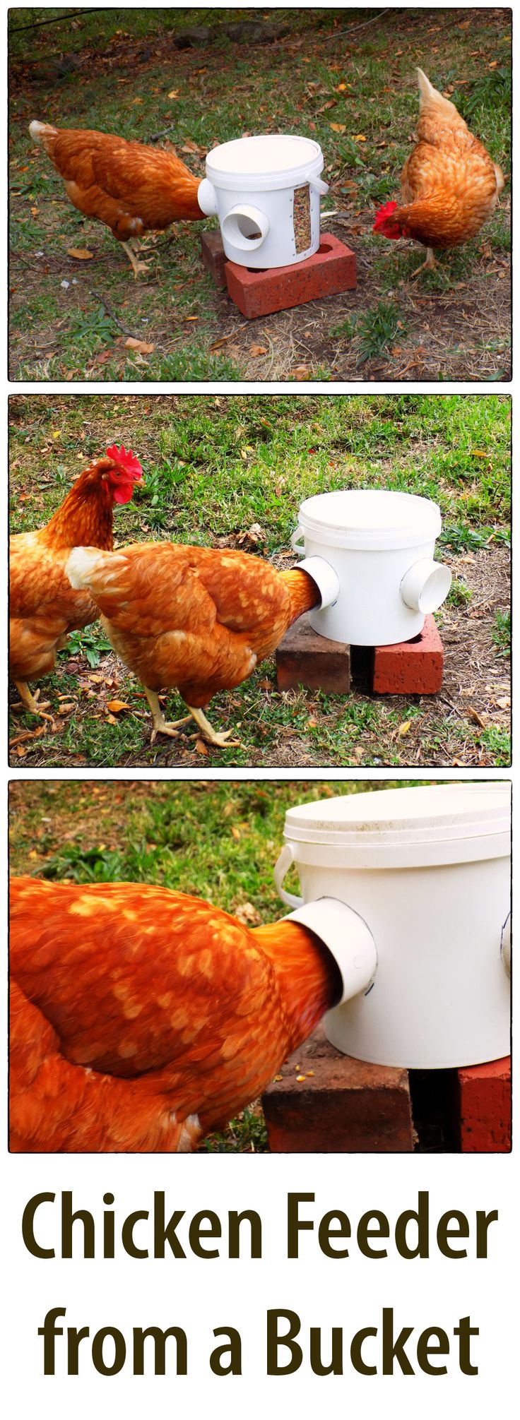 Traditional feeders make it easy for other animals to get at the food. This bucket feeder stops most animals from stealing food and it ensures minimal mess when your chickens eat.