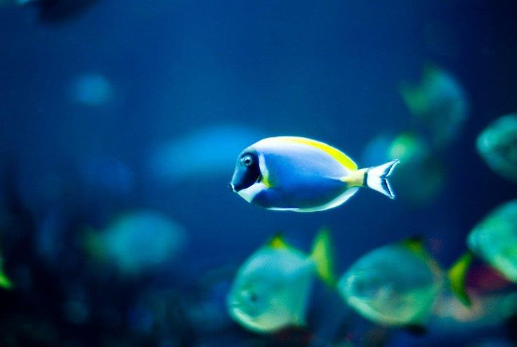 #bassfishing  #fisheries  #fishingshop  #fishingtackleshop  #fishinghook  #lure  #reel  #fishingstore  #go fishing  #walleyefishing  #huntingandfishing  #bait  #tackle  #angler  #saltwater  #baitandtackle  #fising  #carpfish  #shimanofishing  #deepseafishing  #jig  #fishingknots  #livebait