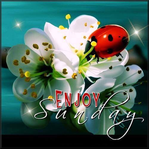 Enjoy Sunday sunday sunday quotes happy sunday sunday quote happy sunday quotes