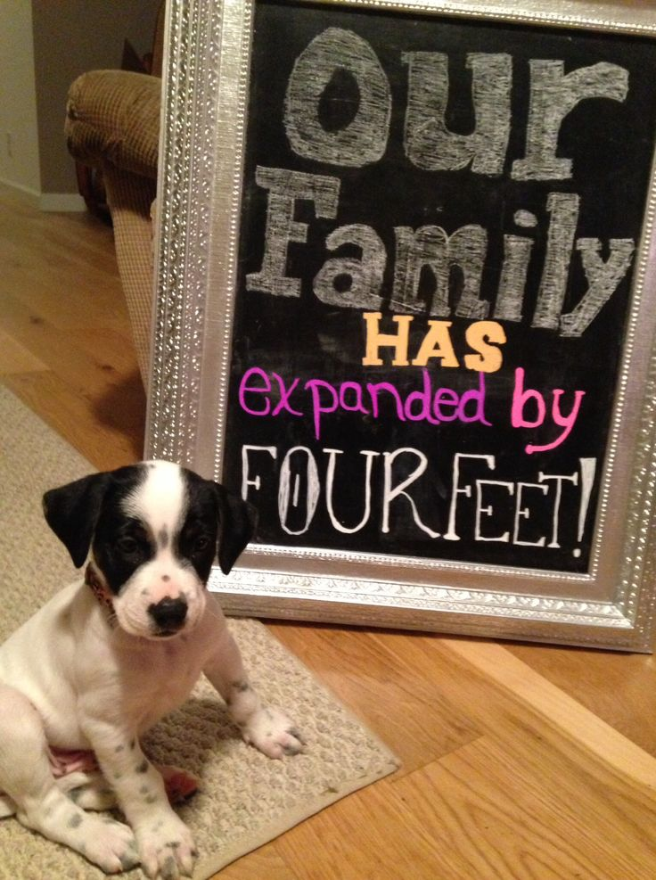 New puppy announcement. I am going to do something like this when i finally get my puppy