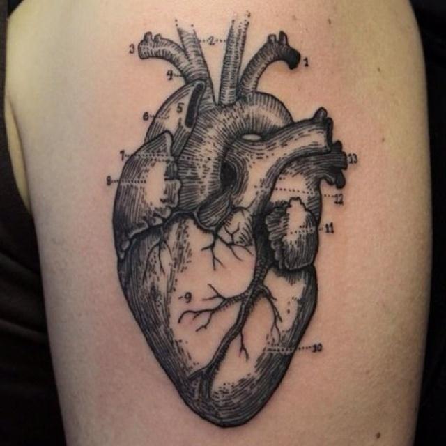 17 best Tattoo Ideas images on Pinterest   Anatomía humana, Corazón ...