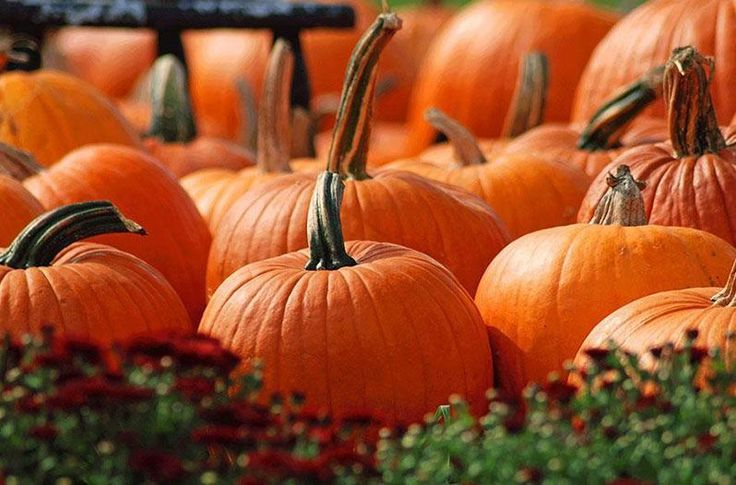 10 Texas Pumpkin Patches That Are Worth the Trip