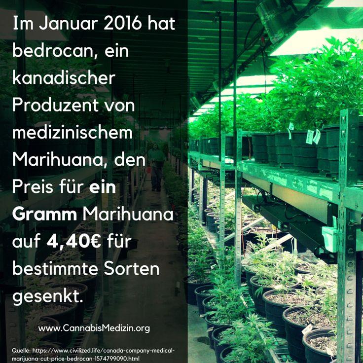 Medizinisches Marihuana für 4.40€ pro Gramm können sich die Patienten in Deutschland nur wünschen. In Deutschland müssen die Patienten, aus ihrer eigenen Tasche, zwischen 15€ - 18€ pro Gramm bezahlen.  Dies kann die Kosten für die Patienten schnell so weit erhöhen, dass eine effektive Dauerbehandlung mit Marihuana nicht möglich ist. Wir können nur hoffen, dass so schnell wie möglich die Kosten von den Krankenkassen übernommen werden, sodass alle Patienten dauerhaften Zugang zu ihrer Medizin…