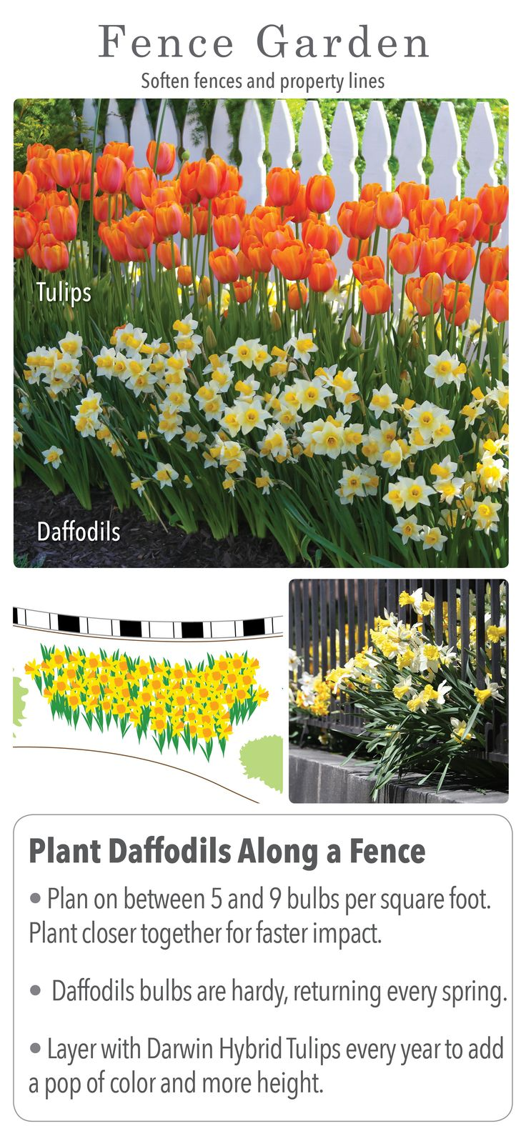 When how to plant daffodil bulbs - Are You Ready To Enjoy An Amazing Bulb Garden Next Spring