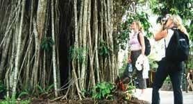 Kuranda - Village in the Rainforest