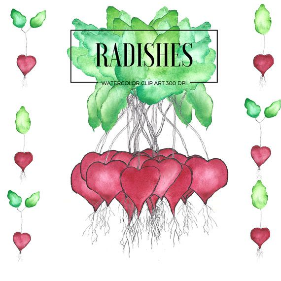 Radish Clip Art Radishes Leaves Watercolor Love by theartcitizen