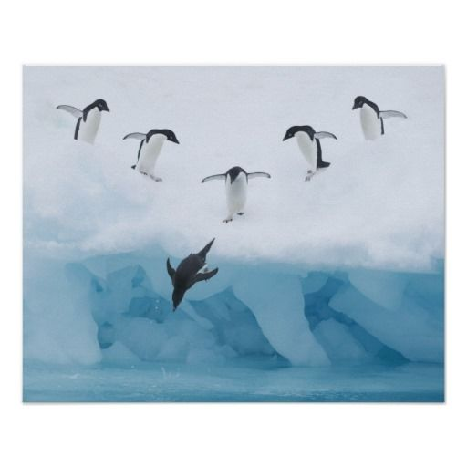 Penguins Jumping into Water Poster