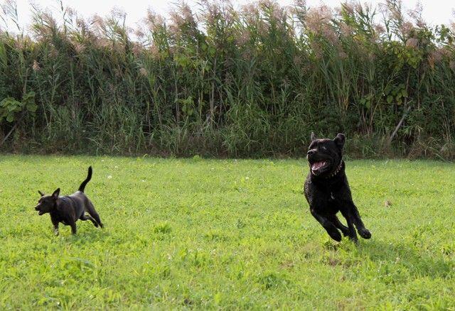Adone and Lulu, having a ball! / Adone e Lulu, che si divertono un sacco!