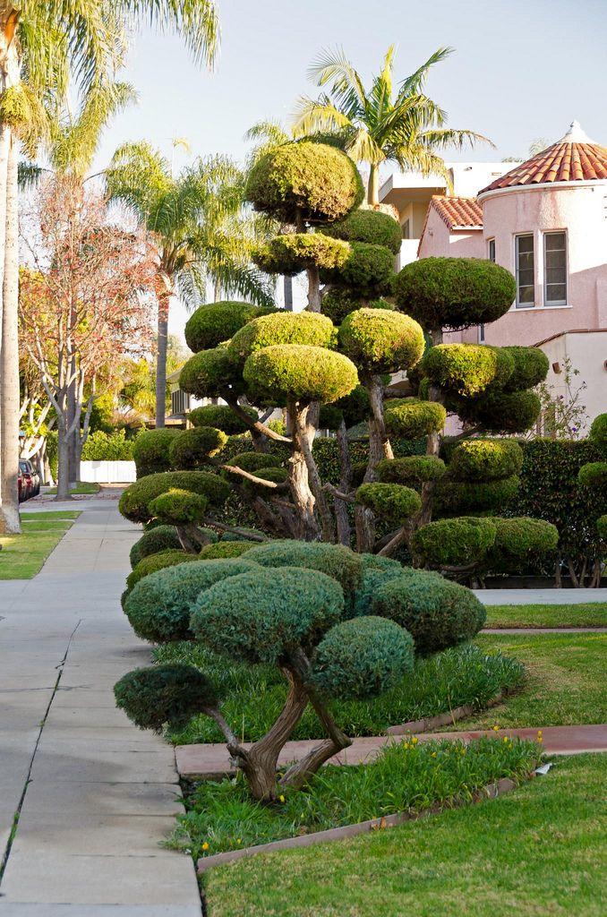 Topiary, Long Beach, California