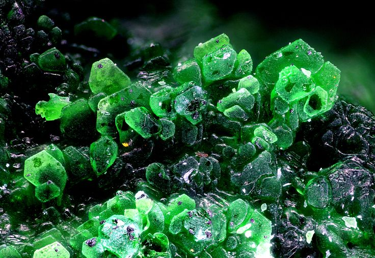 Fedotovite Locality: Great Fissure eruption (Main Fracture), Tolbachik volcano, Kamchatka Oblast', Far-Eastern Region, Russia Many hexagonal tabular green crystals of fedotovite. Mineral found in sublimates around fumaroles. Usually forms crusts of pseudohexagonal flakes. Photo Serge Lavarde