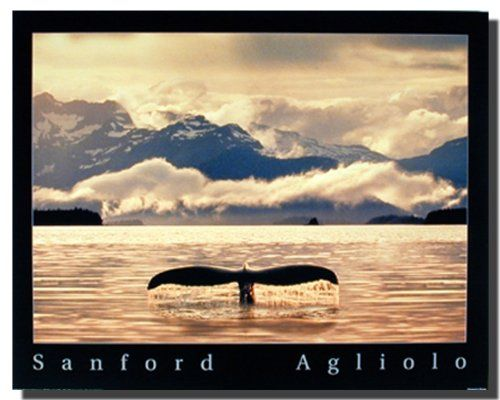 Wow! Give a new dimension to your home by simply adding this beautiful whale tail ocean animal art print poster. This poster will definitely add a unique charm to your living space set up. This poster is the symbol of splendorous charms of nature. Hurry up! Buy this wonderful piece of art for its durable quality with high degree of color accuracy which ensures protect your image for years to come.