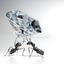 Image result for ants