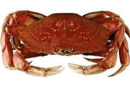 How to Steam Whole Cooked Dungeness Crab | LIVESTRONG.COM