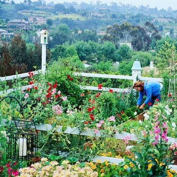 Make It Pretty - Most people think of vegetable gardens as a plot of green, leafy plants in boring rows. But that doesn't have to be the case. You can grow edible plants in a spot that rivals the beauty of any flower garden, as the King family of Southern California has done. In a relatively small space (roughly 20 x 20 feet), they grow mouthwatering fruits, vegetables, and herbs -- as well as flowers.