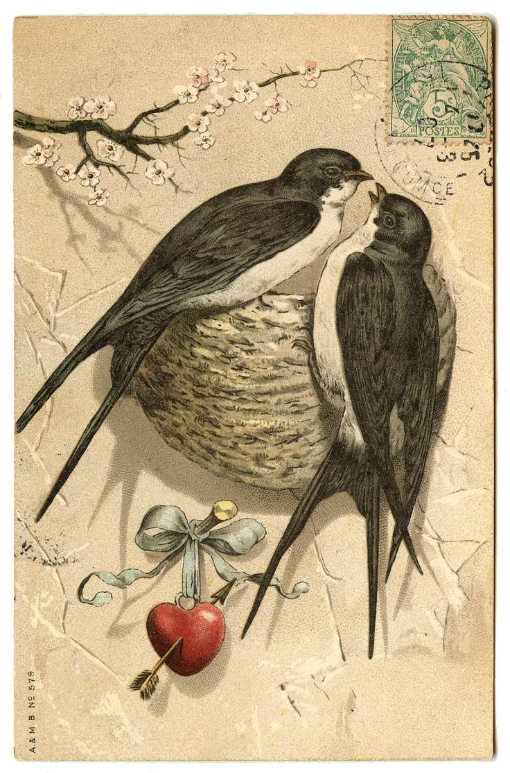 Antique Graphic - Pretty Bird Pair with Nest - The Graphics Fairy