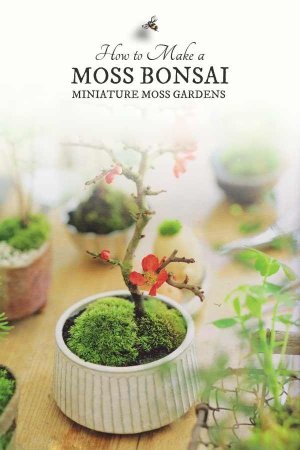 How to make moss bonsais from the book, Miniature Moss Gardens