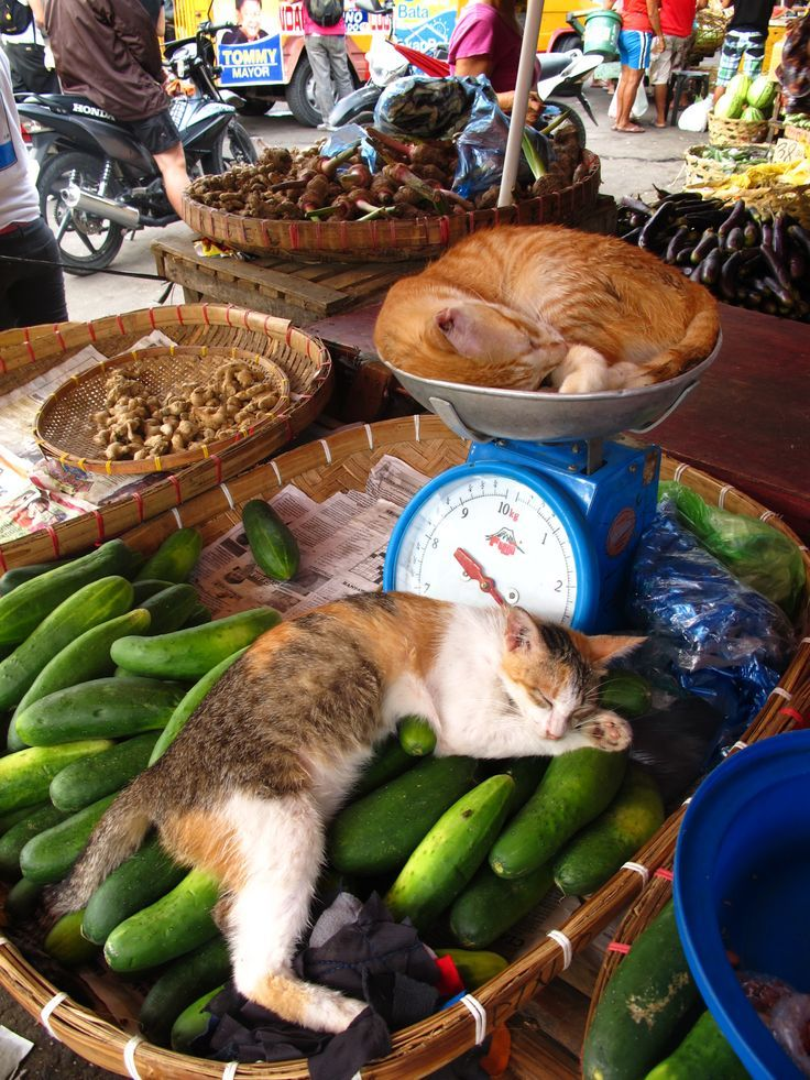 Market kitties @ Cebu see more at http://blog.blackboxs.ru/category/funny-cats/