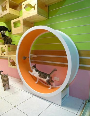 cat exerciser.....my tubby needs (With images) Cat