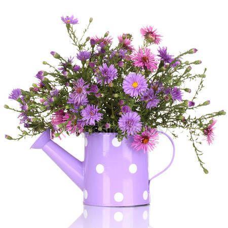 Letöltés - Locsolókanna elszigetelt fehér lila virágok gyönyörű csokor — Stock Kép #23001422