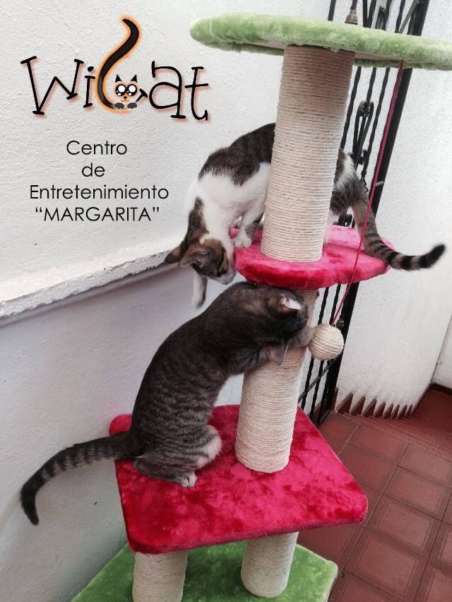 Gimnasio MARGARITA  Encuentra más información en nuestro web site: wicatcolombia.wix.com/wicat o en Facebook:  www.facebook.com/Wicat