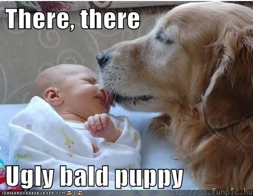 it'll be okay, bald puppy.Funny Dogs, Sweets, Pets, Uglies Bald, Bald Puppies, Things, Baby, Golden Retriever, Animal