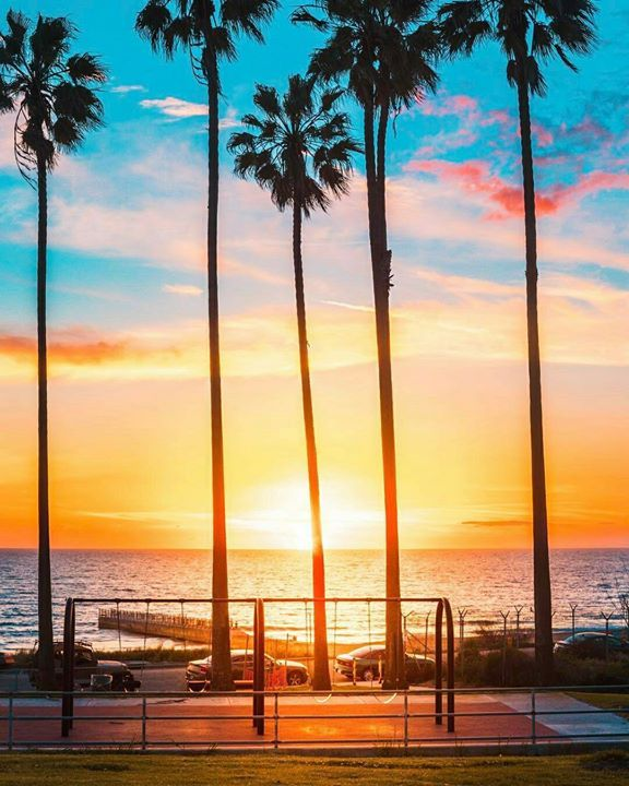 17 Best Ideas About Palm Tree Emoji On Pinterest: 17 Best Ideas About California Palm Trees On Pinterest