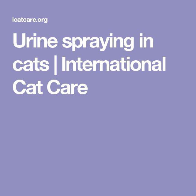 Urine spraying in cats | International Cat Care