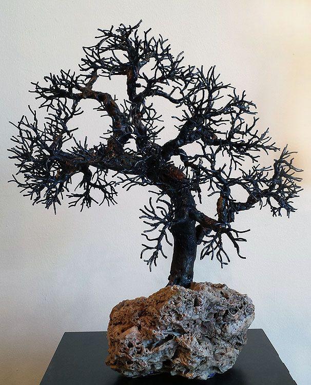 Shell Point Oak