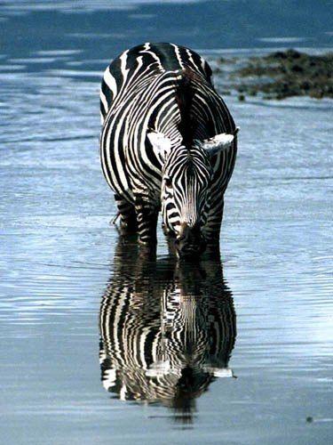 Photo by Ron Davison, Ngorongoro Crater, Tanzania.