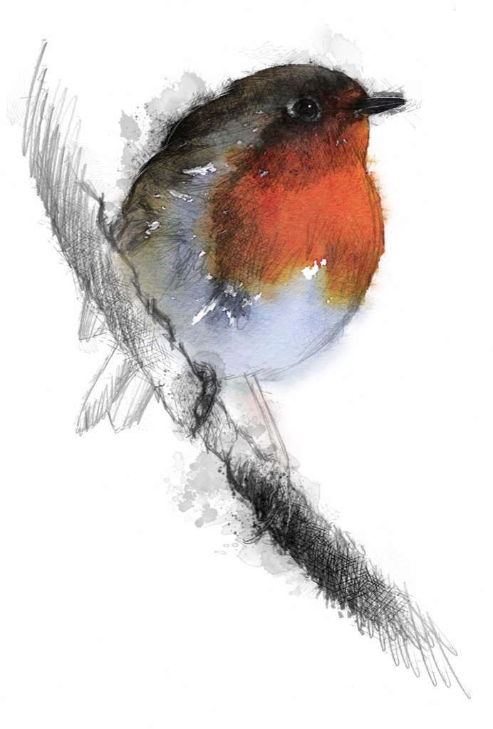Christmas robin, Artist Sean Briggs producing a sketch a day, prints available at https://www.etsy.com/uk/shop/SketchyLife  #art #drawing #http://etsy.me/1rARc0J #robin