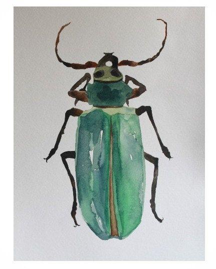 Natural History Entomology Watercolor Painting by CreatedByStorm,