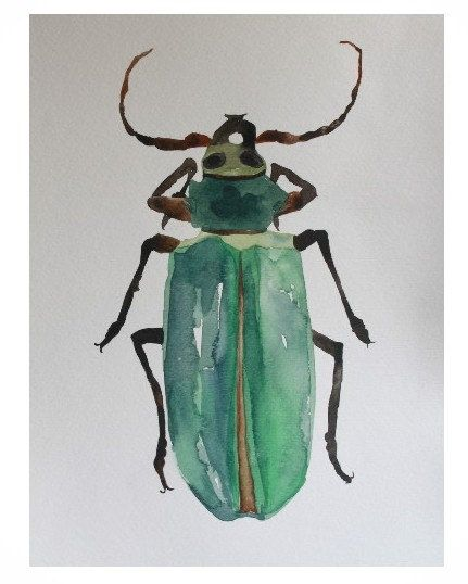 Natural History Entomology Watercolor Painting by CreatedByStorm,
