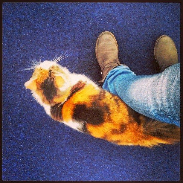 Un gatto nero in giro per il mondo: #10buonimotivi per andar per musei a Torino