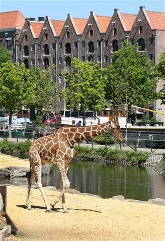 Natura Artis Magistra is a zoo in the centre of Amsterdam