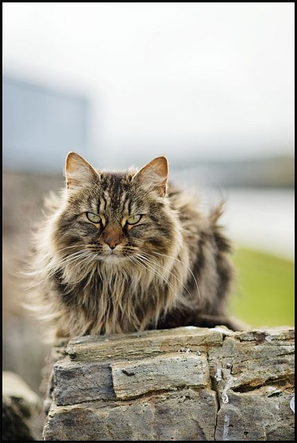 Put a cat on a rock. Also, this is possible the most handsome cat I've ever seen in my life. Aside from my dear departed CJ of course.