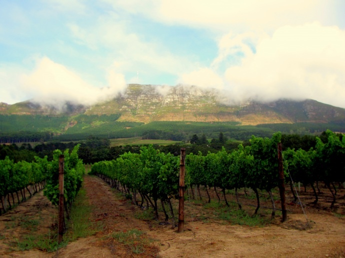 The Constantia Valley - Cape Town's Vineyard. Like this photo if you want some South Africa wine!