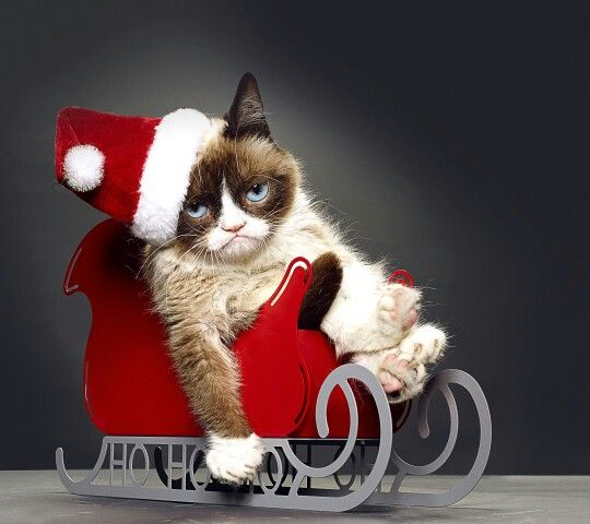 """Grumpy Cat"" Christmas"