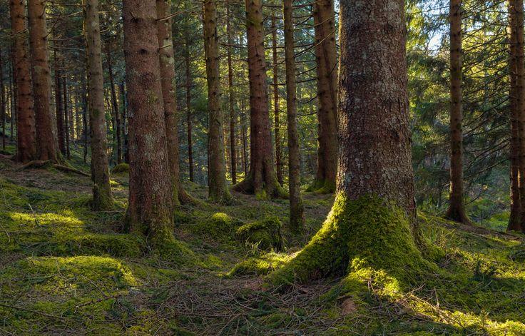 Forest Morning by Eirik Sørstrømmen on 500px
