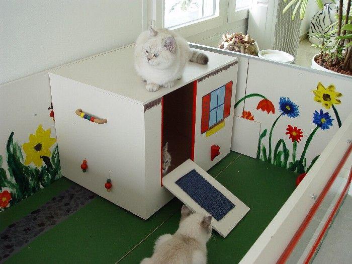 Kitten-haus2.jpg (700×525)