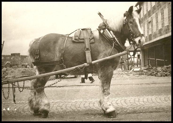 Brauereipferd Ella vor dem Neubau des COOP-Ladengeschäfts, später ALDI, später HERMES Wurst- und Fleischwaren - Echtfoto aus Privatsammlung