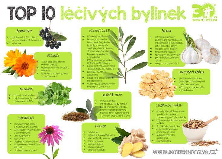TOP10 léčivých bylinek - 30ti denní výzva
