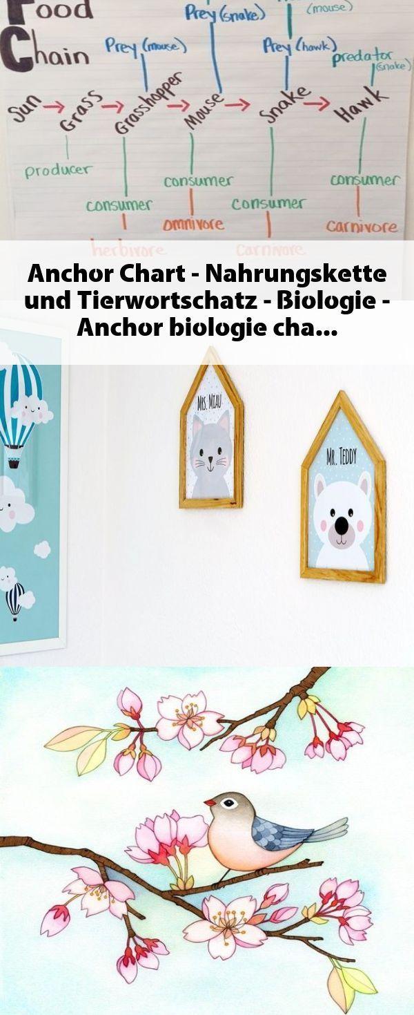 Anchor Chart Nahrungskette Und Tierwortschatz Biologie Anchor