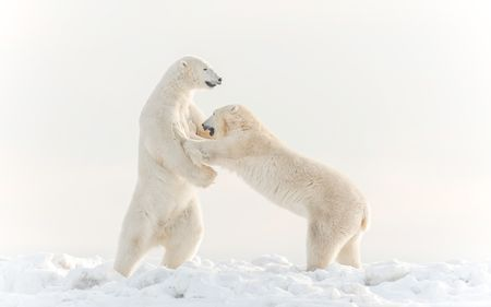Sparring Giants Photo by Gillian Lloyd — National Geographic Your Shot