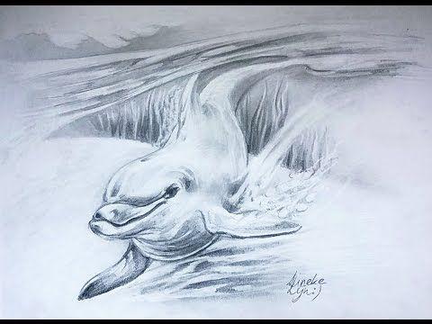 18 Best Dolfijn En Omgeving Tekenen Images On Pinterest