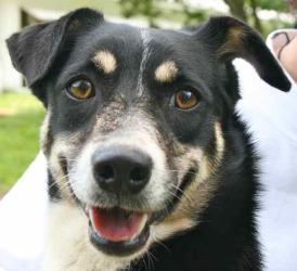 Carmelita is an adoptable Dachshund Dog in Chipley, FL