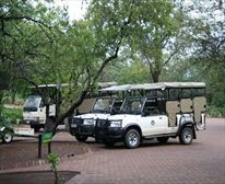 Skukuza Camp offers adventure in the form of guided bush walks and game drives, all under the supervision of well informed and keen professional field guides. Important to note is that children under the age of six are not permitted on game drives, and children under the age of twelve are restricted from game walks.