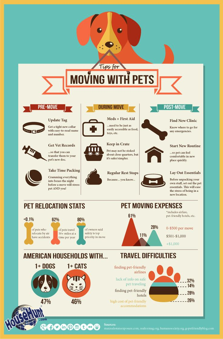 How to move with pets: http://www.househunt.com/news-realestate/moving-with-pets/#.U9f4BGOGcmU #realestate