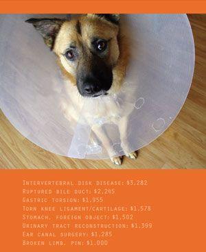 Should you buy pet insurance? | The Bark