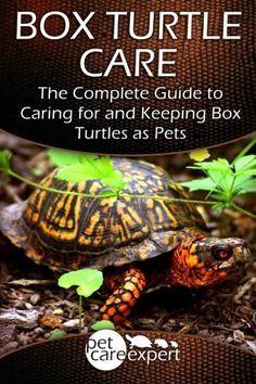 best 25 turtle care ideas on pinterest pet turtle